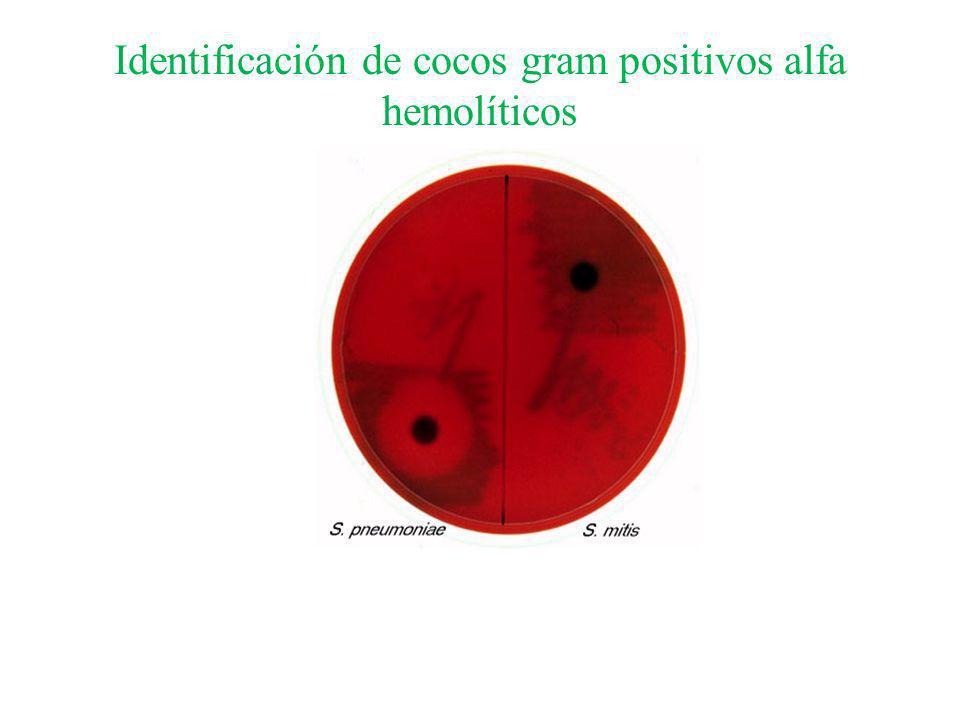 Identificación de cocos gram positivos alfa hemolíticos Sensibilidad a la optoquina