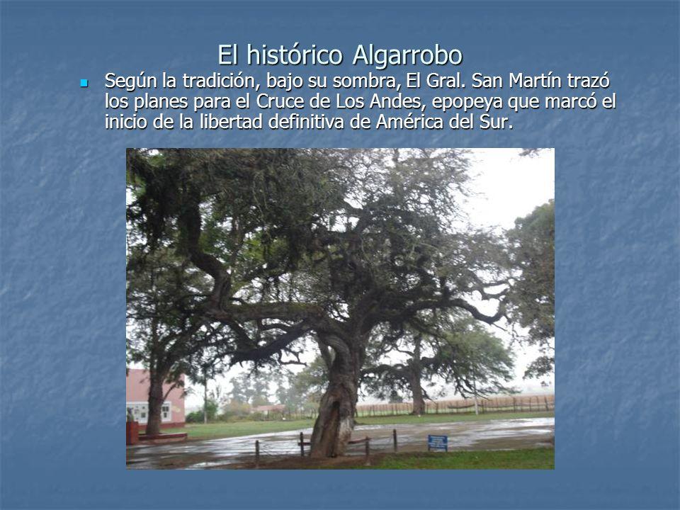 El histórico Algarrobo Según la tradición, bajo su sombra, El Gral. San Martín trazó los planes para el Cruce de Los Andes, epopeya que marcó el inici