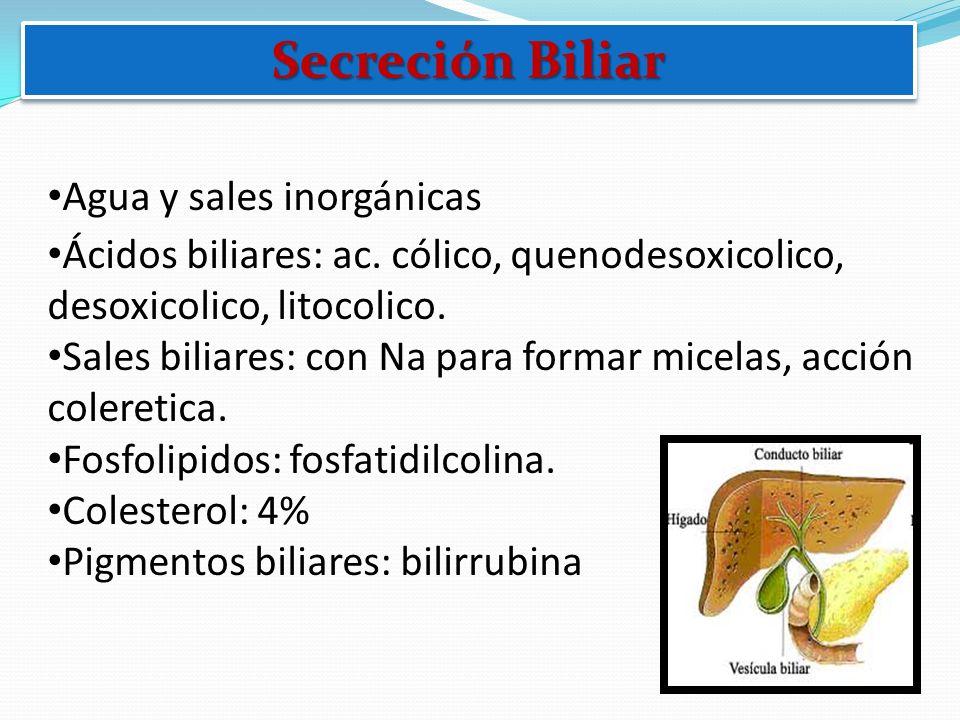 Secreción Biliar Agua y sales inorgánicas Ácidos biliares: ac. cólico, quenodesoxicolico, desoxicolico, litocolico. Sales biliares: con Na para formar
