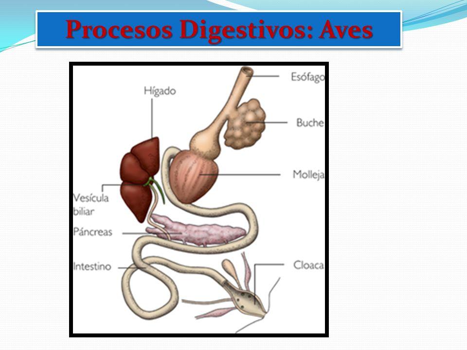 Procesos Digestivos: Aves