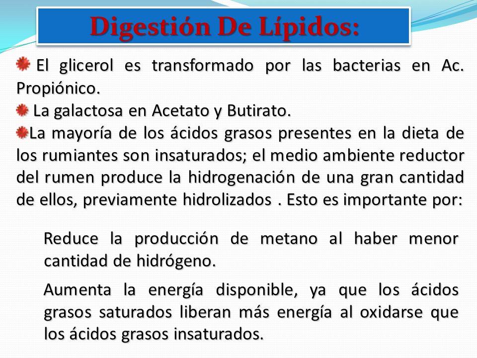 El glicerol es transformado por las bacterias en Ac. Propiónico. La galactosa en Acetato y Butirato. La galactosa en Acetato y Butirato. La mayoría de