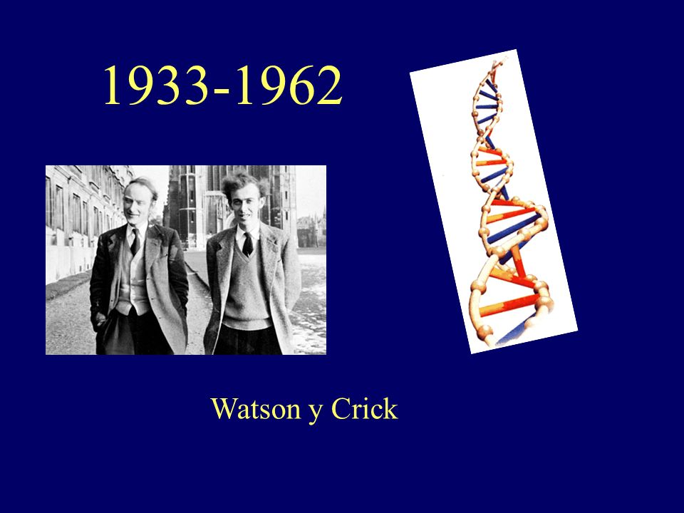 1933-1962 Watson y Crick