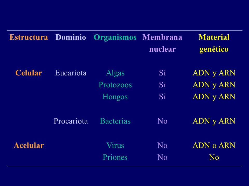 Estructura Celular Dominio Eucariota Organismos Algas Protozoos Hongos Membrana nuclear Si Material genético ADN y ARN ProcariotaBacteriasNoADN y ARN