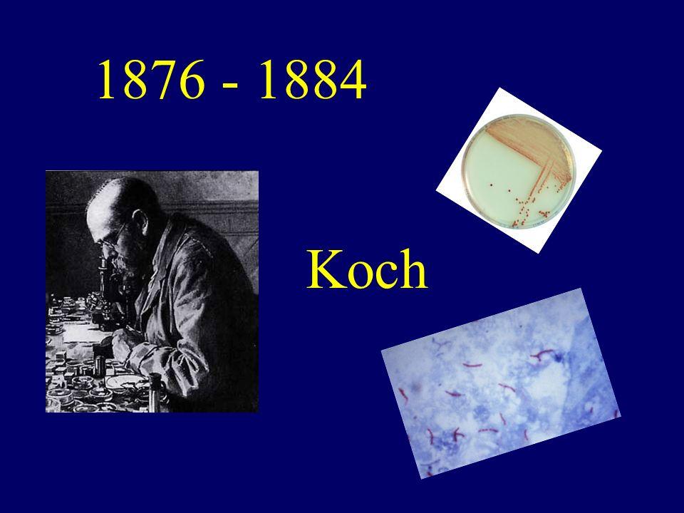 Koch 1876 - 1884