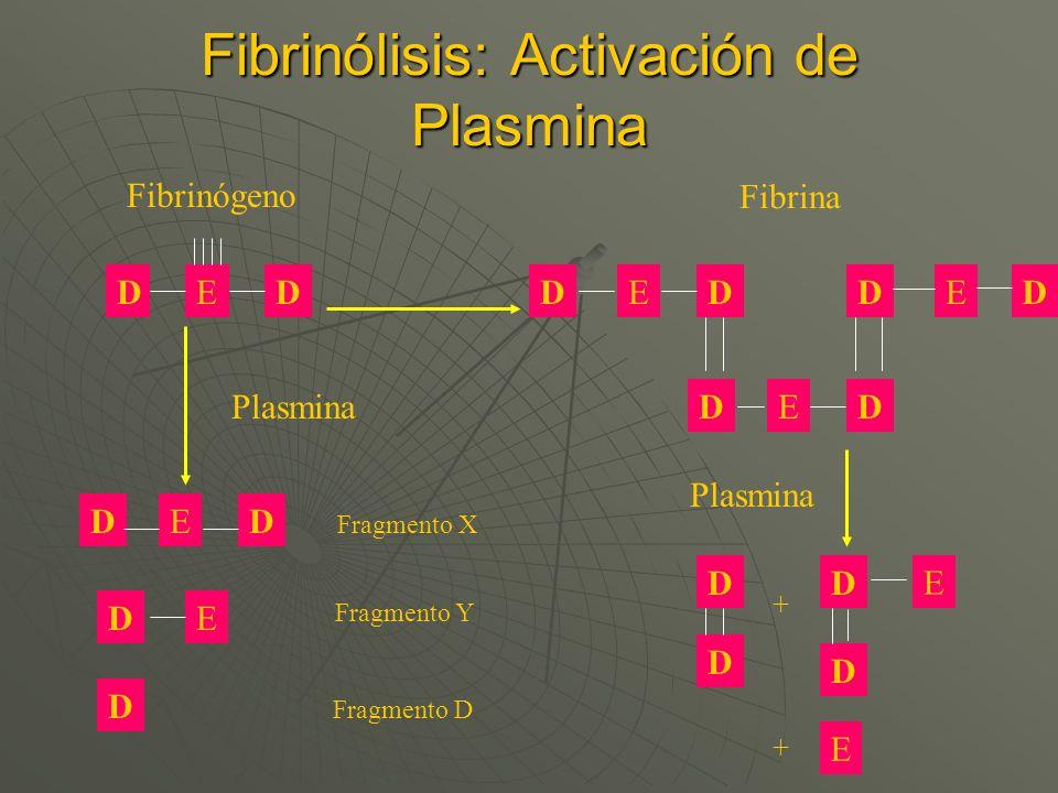 Fibrinólisis: Activación de Plasmina DDDD DD DD D D D D DD D D EEE E E E E E Fibrina Fibrinógeno Fragmento X Fragmento Y Plasmina Fragmento D + +