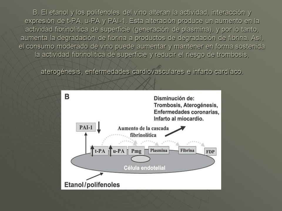 B. El etanol y los polifenoles del vino alteran la actividad, interacción y expresión de t-PA, u-PA y PAI-1. Esta alteración produce un aumento en la