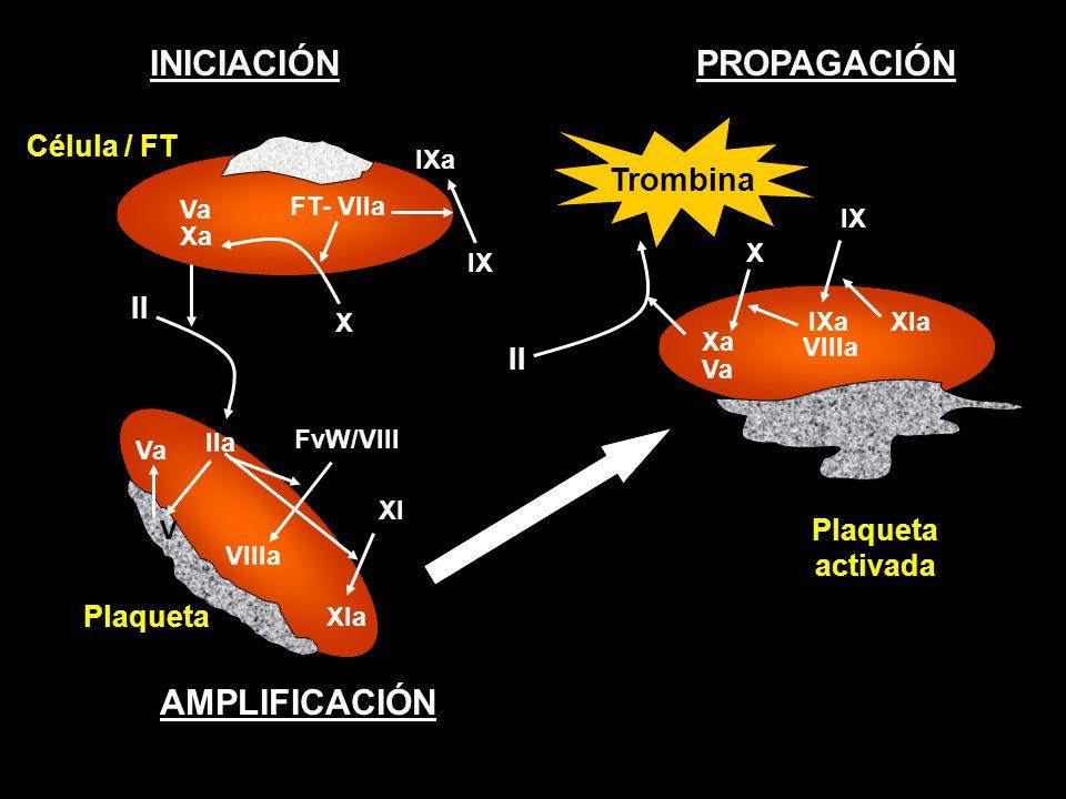 PROPAGACIÓN Plaqueta activada INICIACIÓN Célula / FT Plaqueta II IIa AMPLIFICACIÓN Va FT- VIIa II Trombina IXa VIIIa XIa IX IXa Xa X Va Xa X Va V XI X