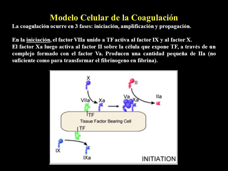 Modelo Celular de la Coagulación La coagulación ocurre en 3 fases: iniciación, amplificación y propagación. En la iniciación, el factor VIIa unido a T