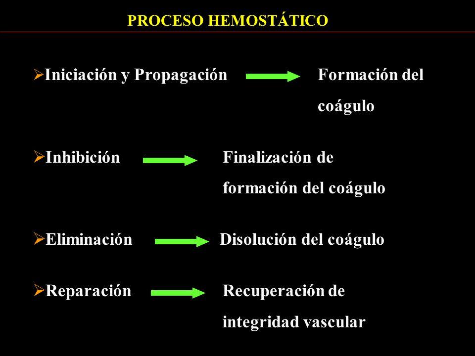 PROCESO HEMOSTÁTICO Iniciación y Propagación Formación del coágulo Inhibición Finalización de formación del coágulo Eliminación Disolución del coágulo