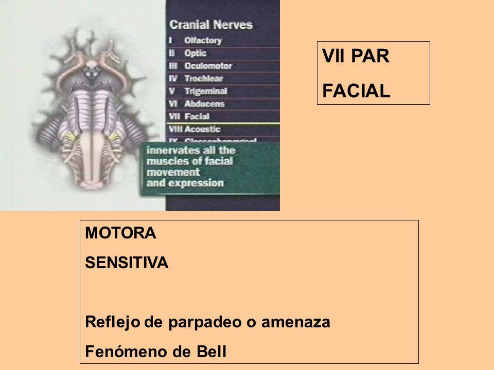 VII PAR FACIAL MOTORA SENSITIVA Reflejo de parpadeo o amenaza Fenómeno de Bell