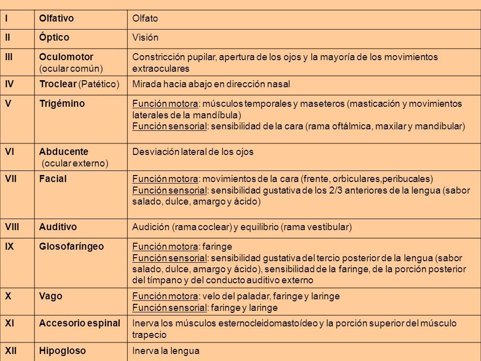COMPONENTE ACUSTICO 1)Agudeza auditiva 2) Conducción aérea y ósea del sonido Diapasón Pruebas de Rinne y de Weber COMPONENTE VESTIBULAR 1) Nistagmus 2) Prueba de Bárány