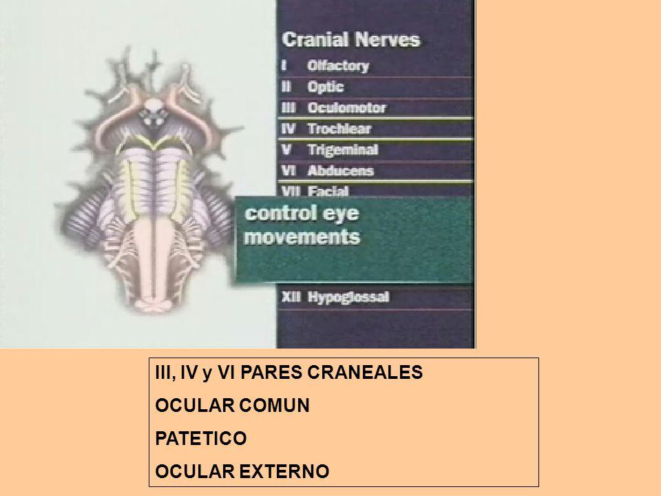 III, IV y VI PARES CRANEALES OCULAR COMUN PATETICO OCULAR EXTERNO