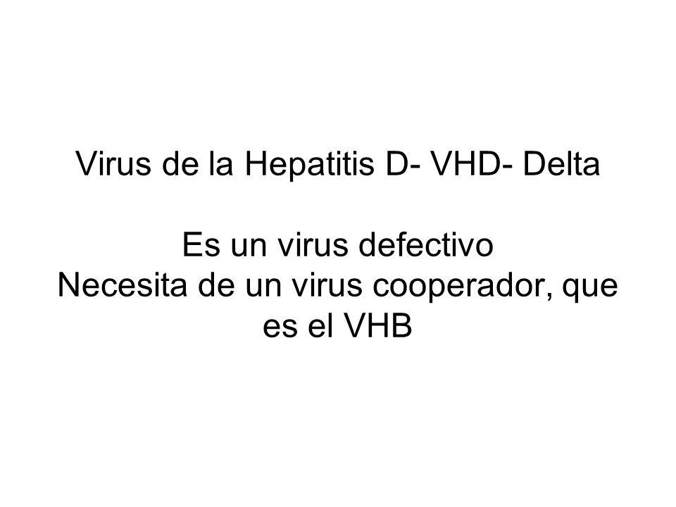 Virus de la Hepatitis D- VHD- Delta Es un virus defectivo Necesita de un virus cooperador, que es el VHB