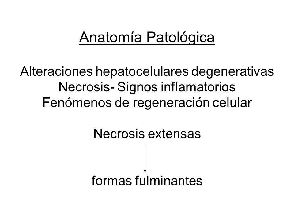 Anatomía Patológica Alteraciones hepatocelulares degenerativas Necrosis- Signos inflamatorios Fenómenos de regeneración celular Necrosis extensas form