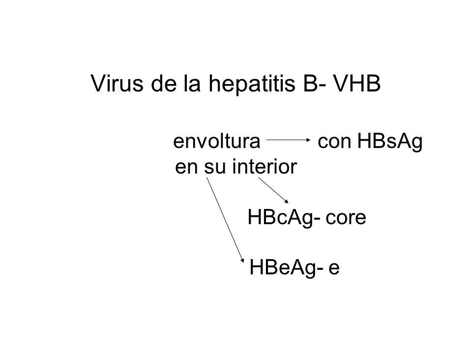 Virus de la hepatitis B- VHB envoltura con HBsAg en su interior HBcAg- core HBeAg- e