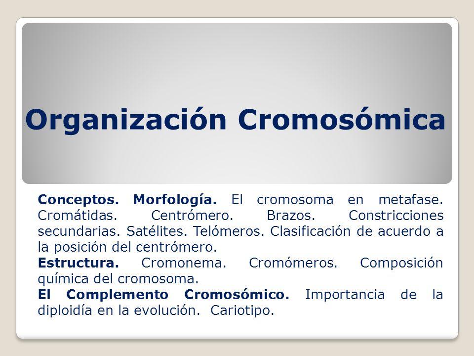Organización Cromosómica Conceptos. Morfología. El cromosoma en metafase. Cromátidas. Centrómero. Brazos. Constricciones secundarias. Satélites. Telóm