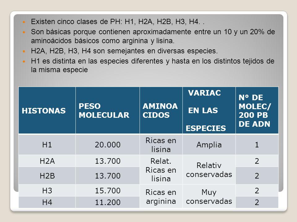 Existen cinco clases de PH: H1, H2A, H2B, H3, H4.. Son básicas porque contienen aproximadamente entre un 10 y un 20% de aminoácidos básicos como argin