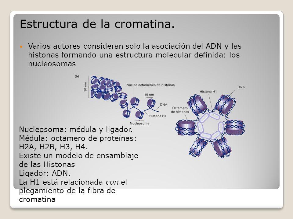 Estructura de la cromatina. Varios autores consideran solo la asociación del ADN y las histonas formando una estructura molecular definida: los nucleo