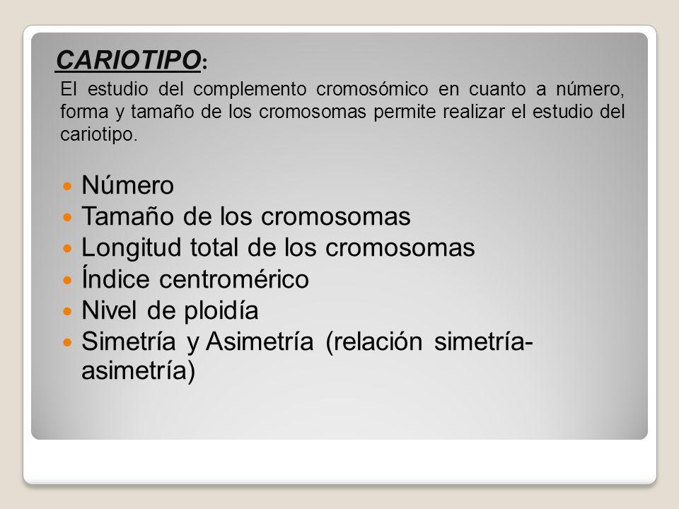 Número Tamaño de los cromosomas Longitud total de los cromosomas Índice centromérico Nivel de ploidía Simetría y Asimetría (relación simetría- asimetr