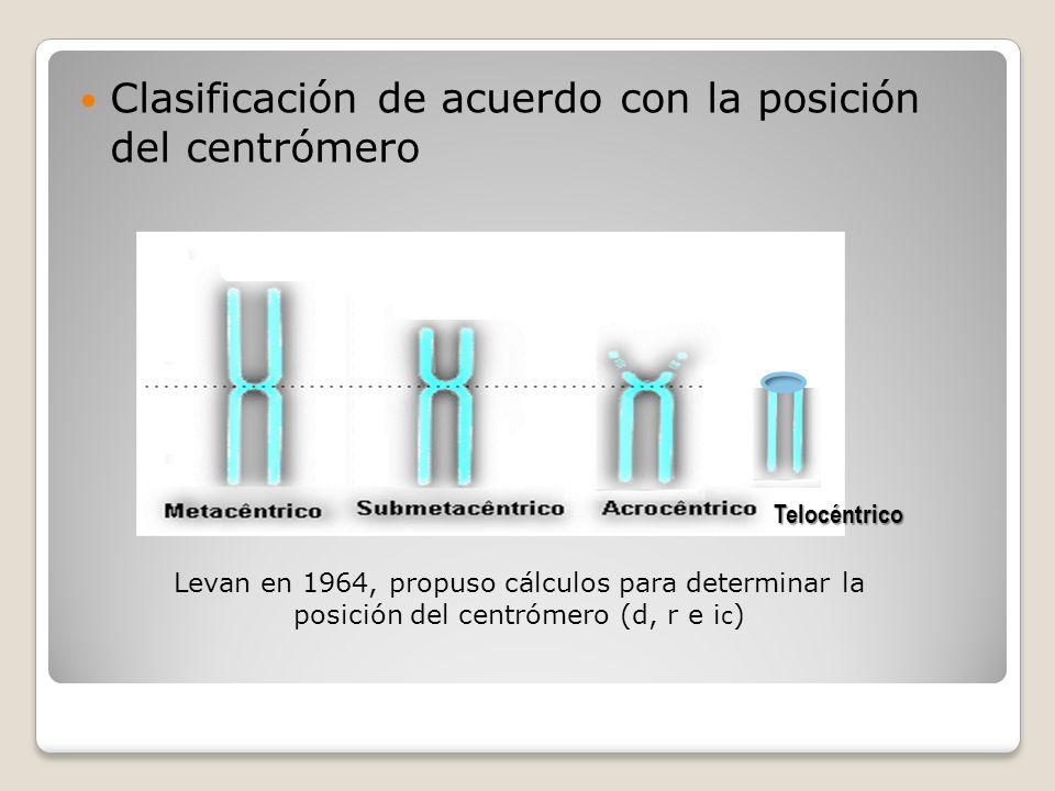 Clasificación de acuerdo con la posición del centrómero Telocéntrico Levan en 1964, propuso cálculos para determinar la posición del centrómero (d, r