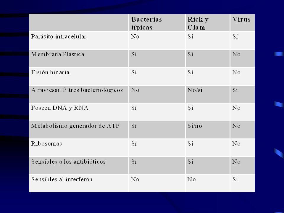 VIROLOGÍA.MORFOLOGÍA GENERAL: 1)Virus helicoidales.