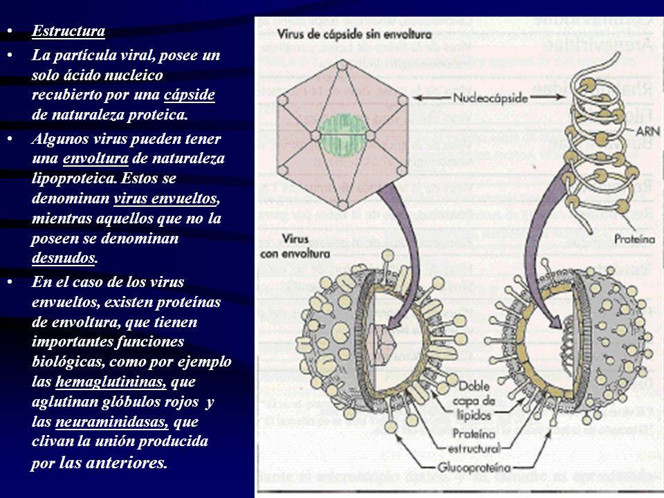 Propiedades de los virus: En su mayoría son sensibles al calor.