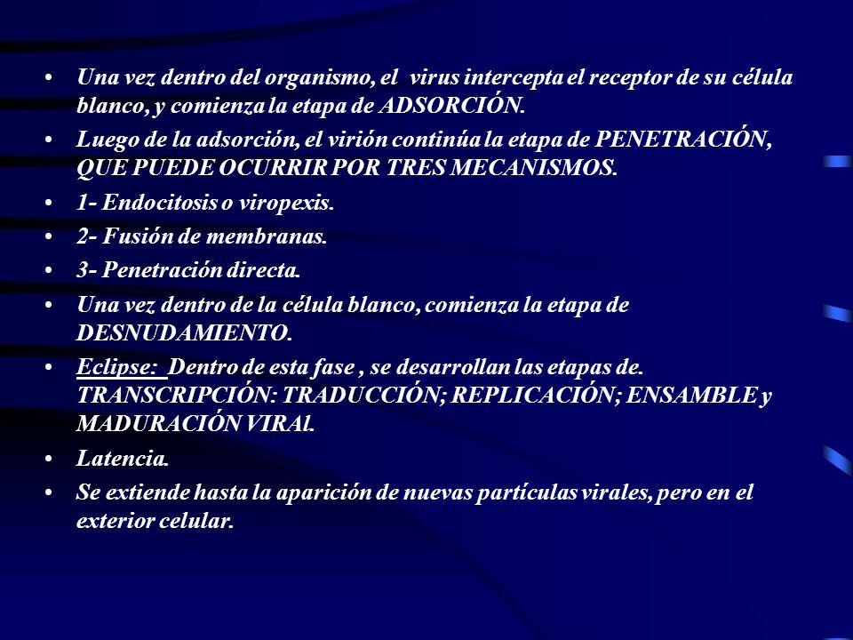 Flia: Flaviviridae.40-50 Nm. Gen: Flavivirus. Pestivirus.