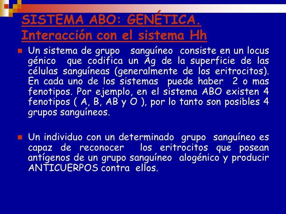 LOS GRUPOS SANGUÍNEOS SON ALOGÉNICOS. La mayoría de los individuos desarrollan anticuerpos frente a los antígenos ABO alogénicos aunque no hayan sido