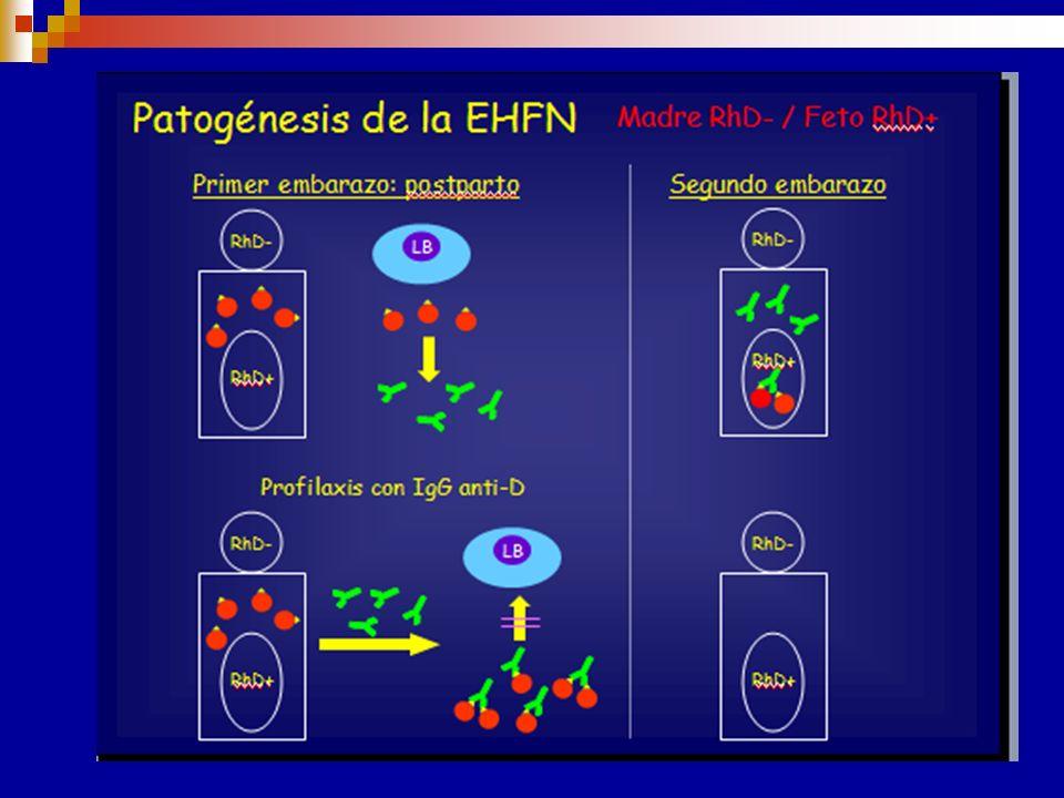 Etiopatogenia Estimulación antigénica durante el embarazo Pasaje de hematíes fetales a través de la placenta Ag D 38 días de gestación Respuesta secun