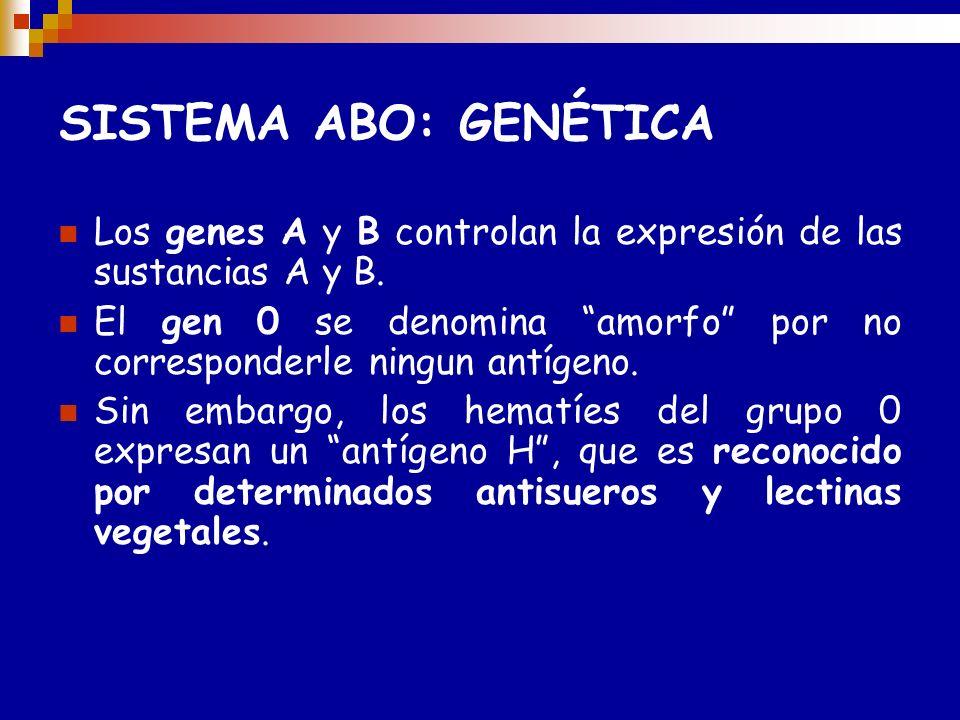 SISTEMA ABO: Genotipos posibles para cada Fenotipo. Grupo sanguíneo ( fenotipos) Genotipos posibles AntígenosAnticuerpos séricos frente a ABO Frecuenc