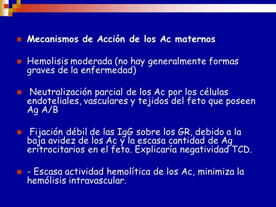 EHFN ABO Ac involucrados NO son los Ac naturales/regulares anti-A y/o anti-B y/o anti-ÁB (IgM) Ac formados como respuesta al estímulo antigénico: Tran