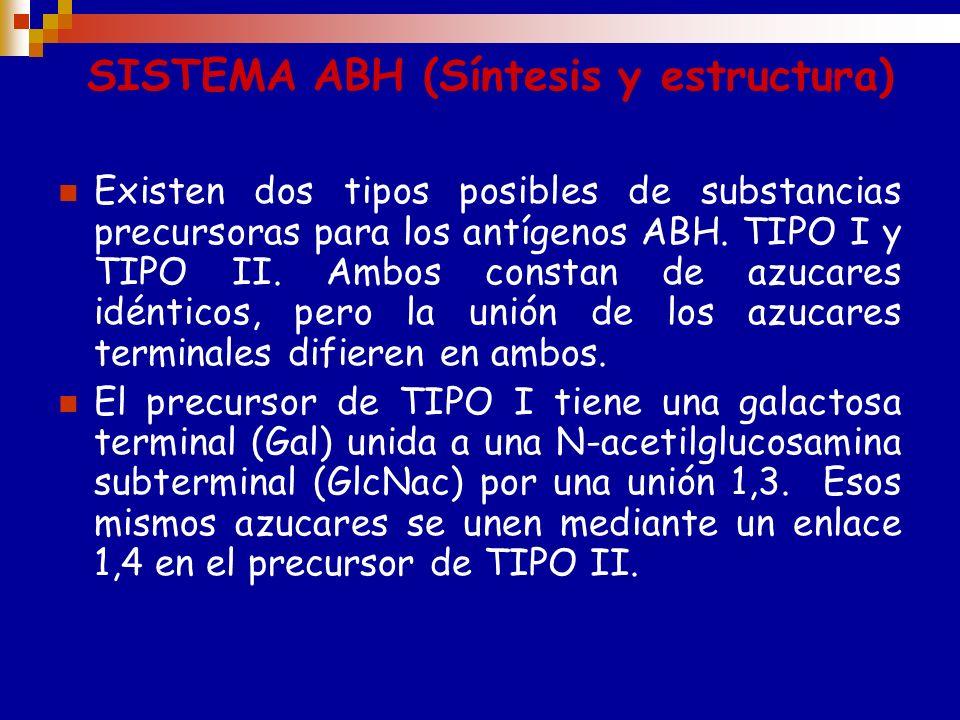 SISTEMA ABO: GENÉTICA Los genes A y B controlan la expresión de las sustancias A y B. El gen 0 se denomina amorfo por no corresponderle ningun antígen