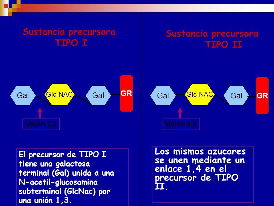 SISTEMA ABH (Síntesis y estructura) Existen dos tipos posibles de substancias precursoras para los antígenos ABH. TIPO I y TIPO II. Ambos constan de a