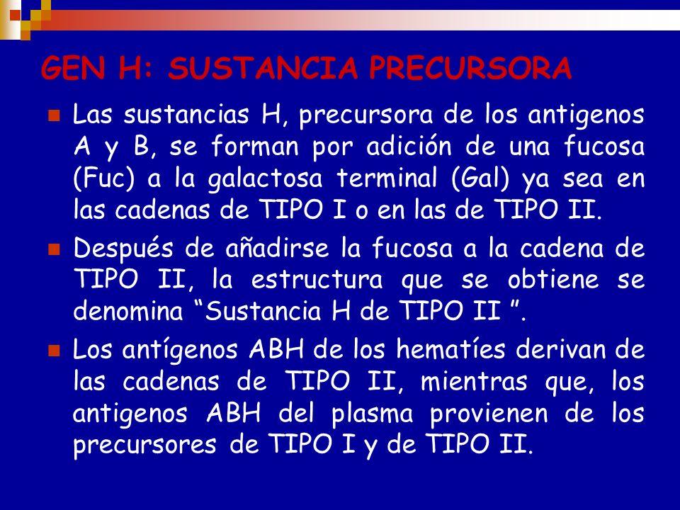 GEN H: SUSTANCIA PRECURSORA La presencia de los antígenos A, B u O en los hematíes depende de la herencia de los genes alelicos, A, B y O. Un gen H si