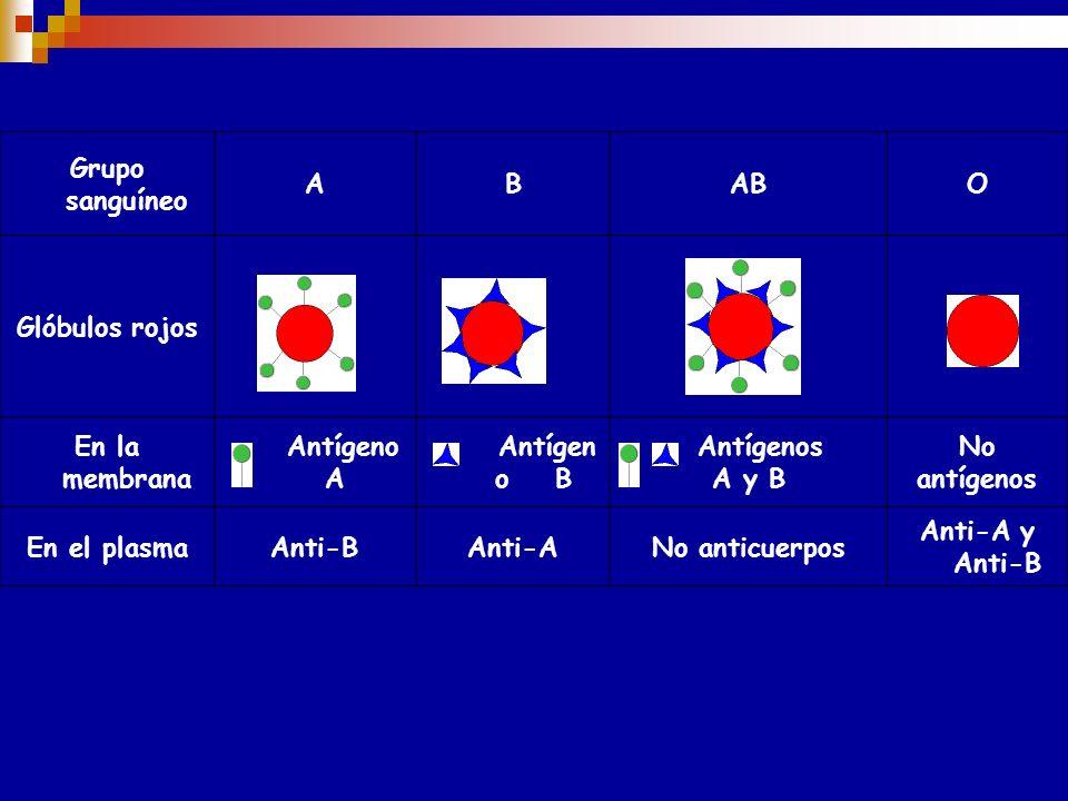 El antiAB producido en individuos de fenotipo O no es una mezcla de antiA y antiB, sino que se trata de un tercer anticuerpo que presenta reacción