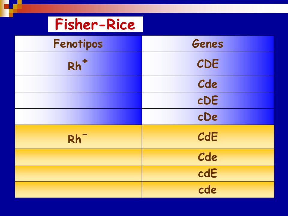 Comparación de las nomenclaturas para los Ag del Sistema Rh WienerFisher –RaceRosenfield RhoDRh1 rh`CRh2 rhERh3 h`rcRh4 hreRh5