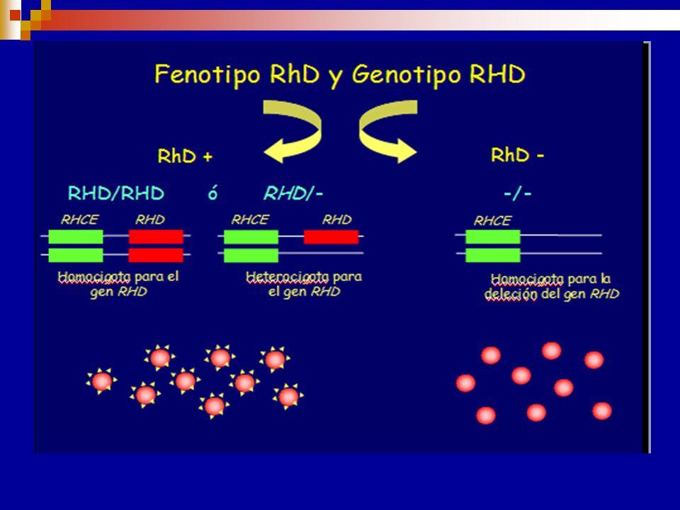 Haplotipos con deleción parcial GR D-- un haplotipo raro. Produce D pero no C, c, E, e Los GR D-- tienen un número de sitios antigénicos particularmen