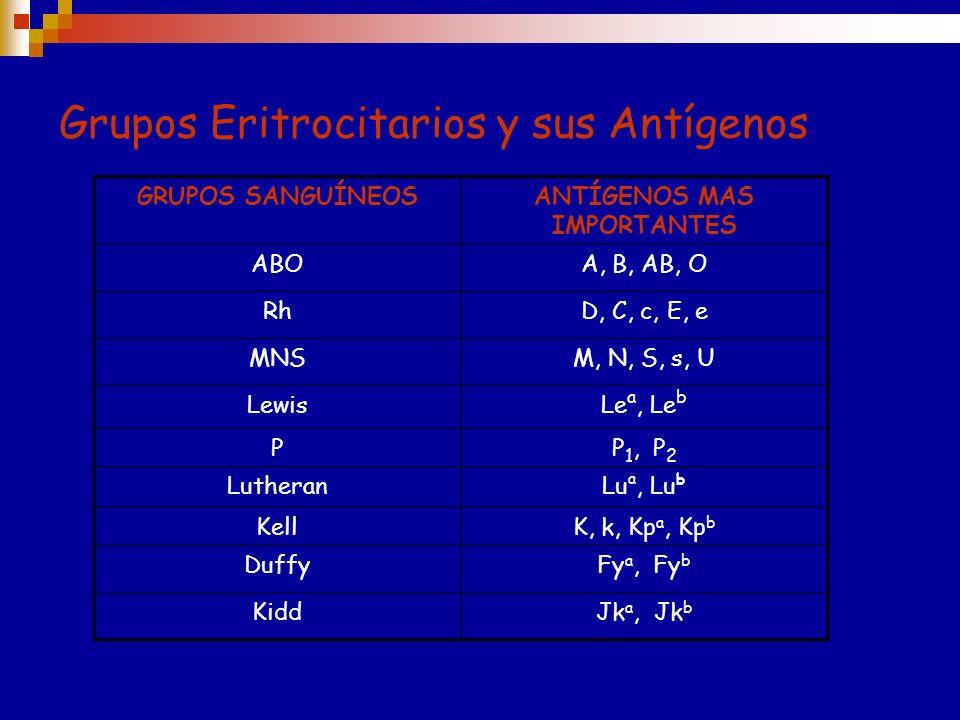 Grupos Eritrocitarios y sus Antígenos GRUPOS SANGUÍNEOSANTÍGENOS MAS IMPORTANTES ABOA, B, AB, O RhD, C, c, E, e MNSM, N, S, s, U LewisLe a, Le b PP 1, P 2 LutheranLu a, Lu b KellK, k, Kp a, Kp b DuffyFy a, Fy b KiddJk a, Jk b