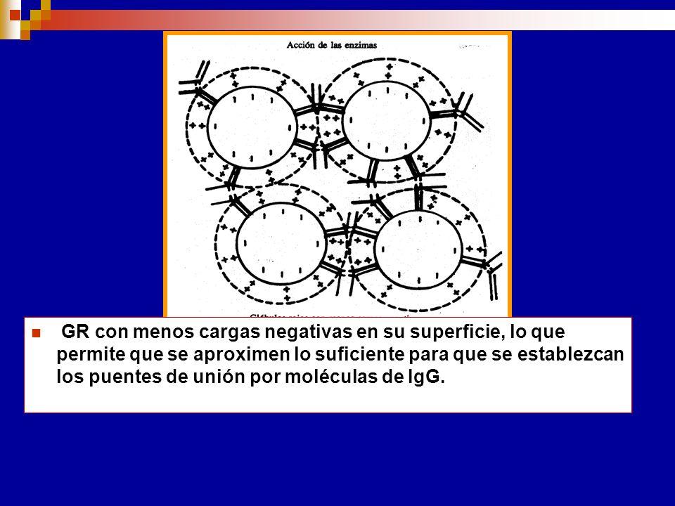Enzimas proteolíticas que eliminan las cargas (-) de la superfície celular Papaína Bromelina Eliminan el Acido Sálico Tripsina Otras sustancias: Albúm