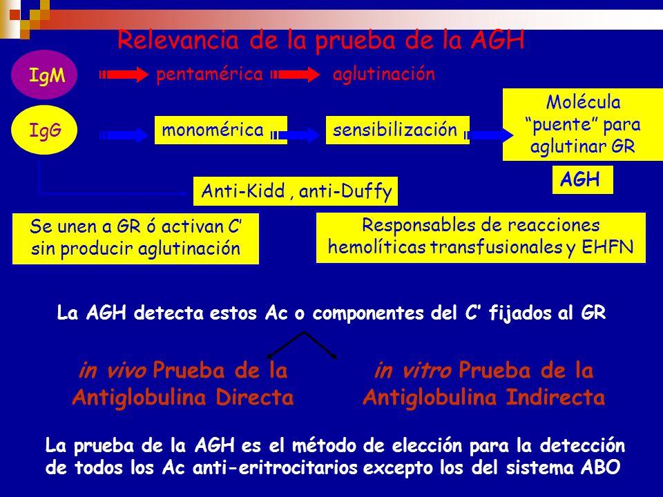 Fundamentos de la prueba de la AGH 1-Todas las moléculas de anticuerpos y los componentes del C son globulinas 2- Los animales inyectados con globulin
