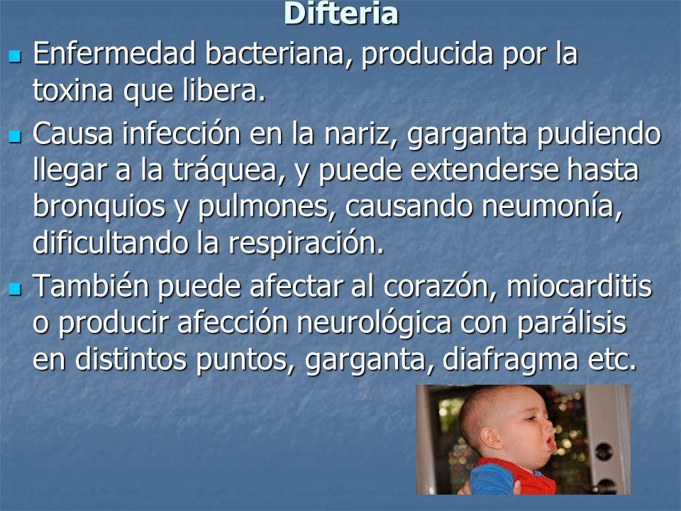 Difteria Enfermedad bacteriana, producida por la toxina que libera. Enfermedad bacteriana, producida por la toxina que libera. Causa infección en la n