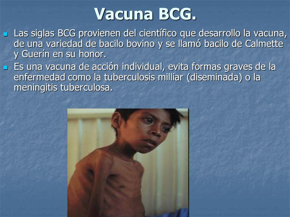 Vacuna BCG. Las siglas BCG provienen del científico que desarrollo la vacuna, de una variedad de bacilo bovino y se llamó bacilo de Calmette y Guerín