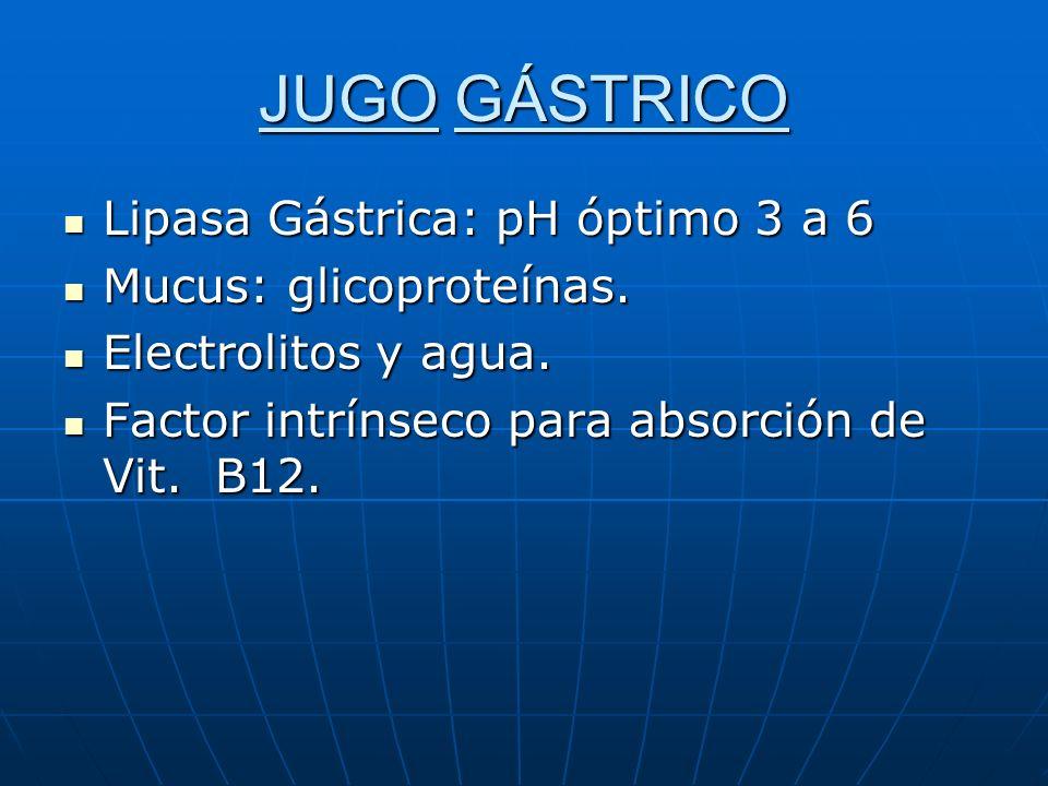JUGO GÁSTRICO Lipasa Gástrica: pH óptimo 3 a 6 Lipasa Gástrica: pH óptimo 3 a 6 Mucus: glicoproteínas. Mucus: glicoproteínas. Electrolitos y agua. Ele
