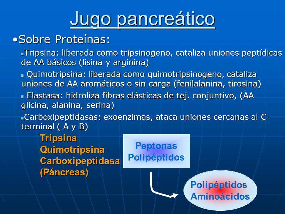 Jugo pancreático Sobre Proteínas:Sobre Proteínas: Tripsina: liberada como tripsinogeno, cataliza uniones peptídicas de AA básicos (lisina y arginina)