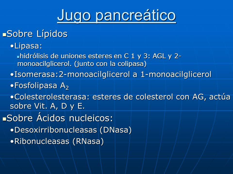 Jugo pancreático Sobre Lípidos Sobre Lípidos Lipasa:Lipasa: hidrólisis de uniones esteres en C 1 y 3: AGL y 2- monoacilglicerol. (junto con la colipas