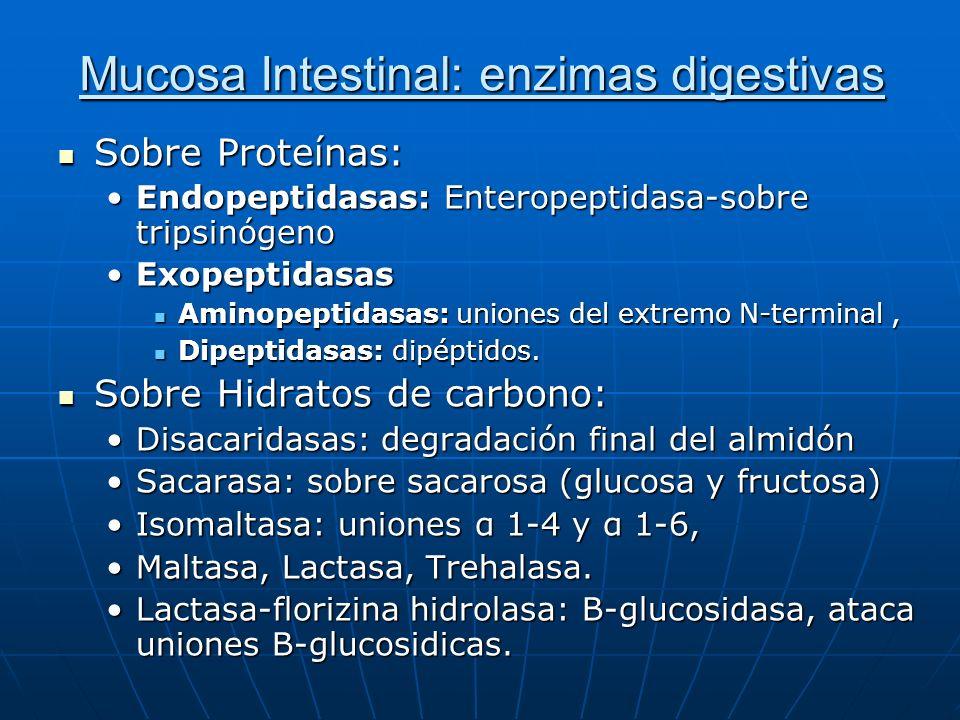 Mucosa Intestinal: enzimas digestivas Sobre Proteínas: Sobre Proteínas: Endopeptidasas: Enteropeptidasa-sobre tripsinógenoEndopeptidasas: Enteropeptid