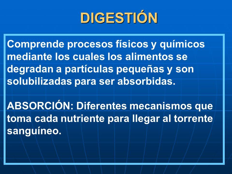 DIGESTIÓN Comprende procesos físicos y químicos mediante los cuales los alimentos se degradan a partículas pequeñas y son solubilizadas para ser absor