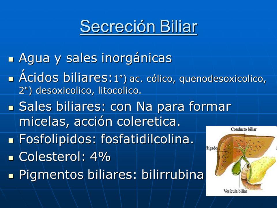 Secreción Biliar Agua y sales inorgánicas Agua y sales inorgánicas Ácidos biliares: 1°) ac. cólico, quenodesoxicolico, 2°) desoxicolico, litocolico. Á
