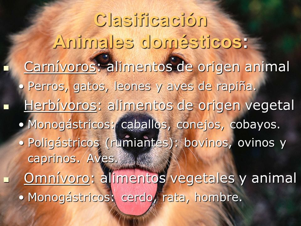 Clasificación Animales domésticos: Carnívoros: alimentos de origen animal Carnívoros: alimentos de origen animal Perros, gatos, leones y aves de rapiñ