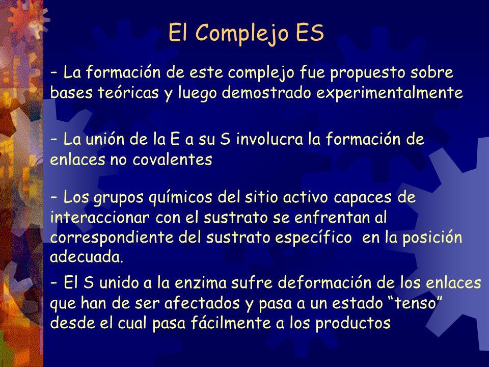 El Complejo ES - La formación de este complejo fue propuesto sobre bases teóricas y luego demostrado experimentalmente - La unión de la E a su S invol